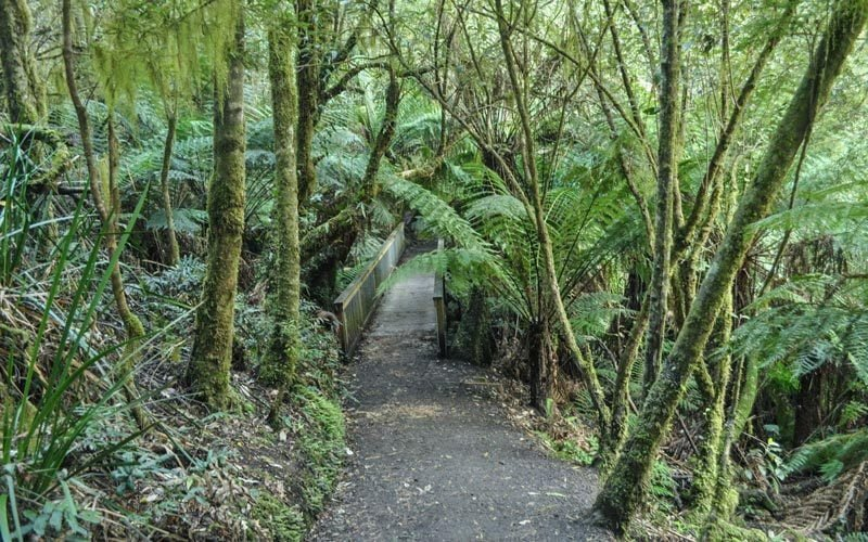 Maits-Rest-Rainforest-Walk