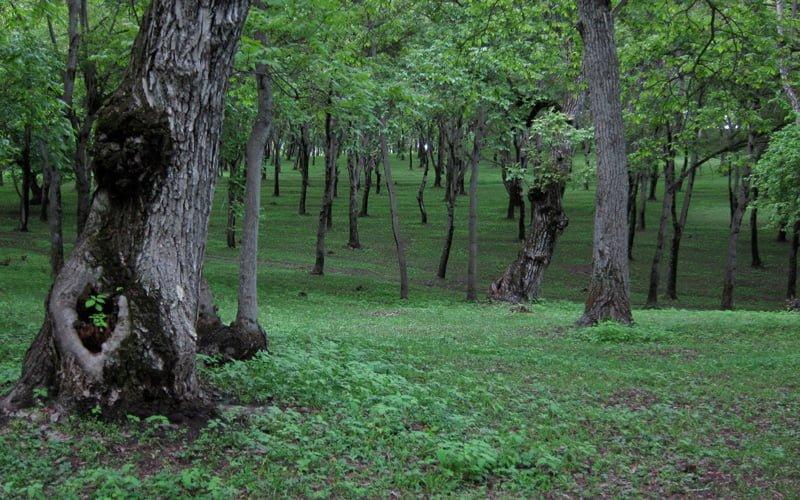 Arslanbob-Ormanlari-Kirgizistan