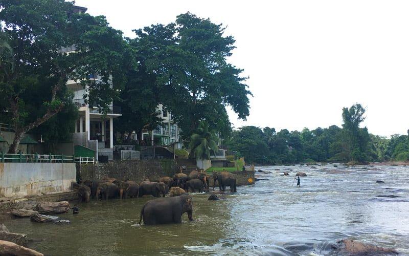 Sri-Lanka-Fil-Yetimhanesi