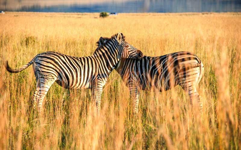 Guney-Afrika-Pilanesberg-Ulusal-Parki